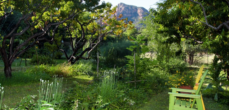 In-the-Know-green-back-yard-header
